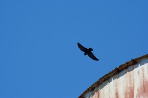Bird in blue sky