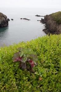 Coast 4
